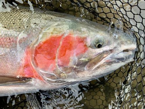 Pesca alle Steelhead in British Columbia - 6