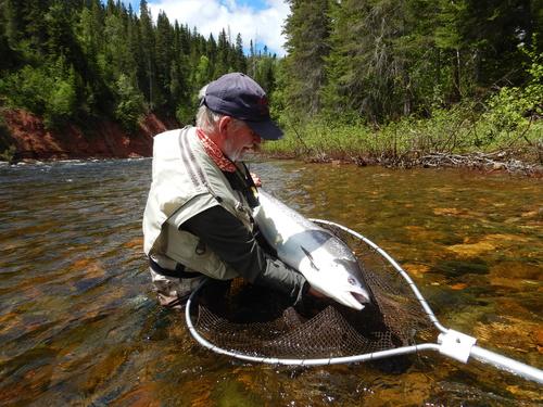 Pesca al salmone in Quebec