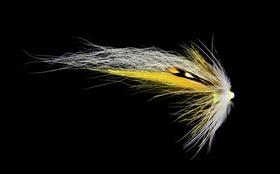 Yellow White Wing